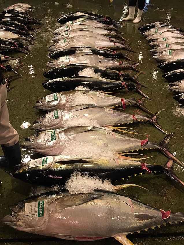 鹿児島地魚1