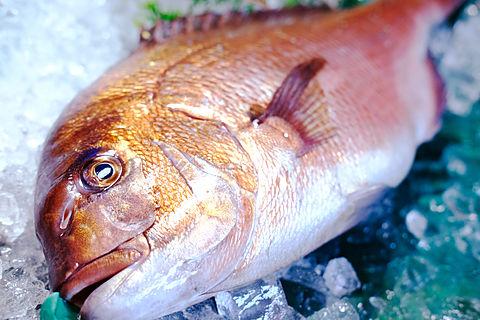 宇和島鮮魚